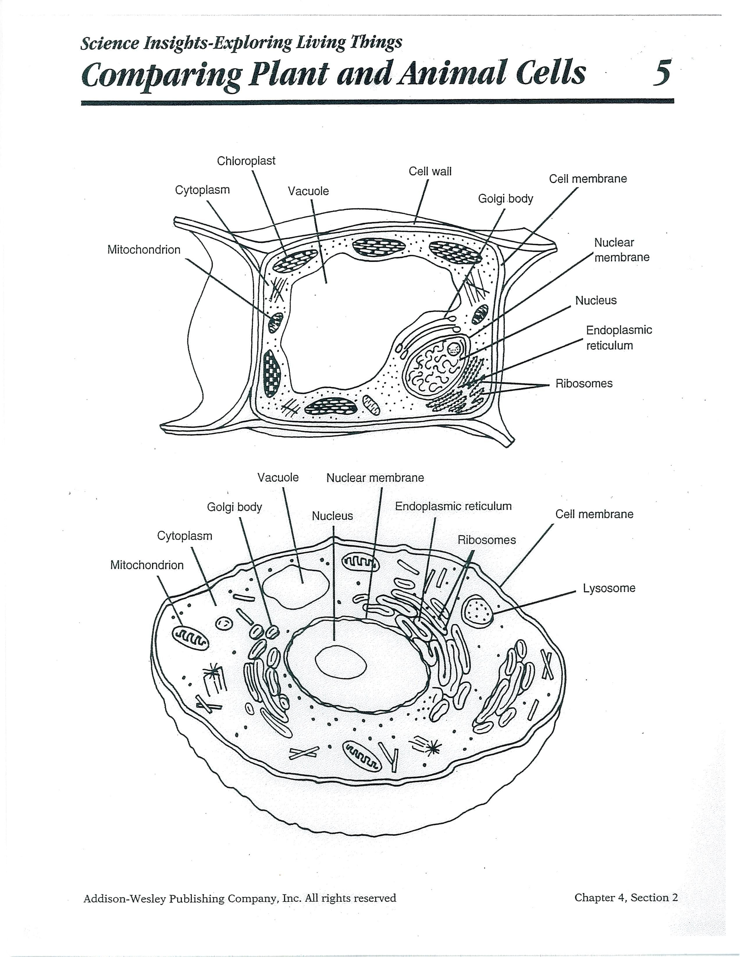Worksheet Cell Worksheets Plant Cell Worksheet Grade The Best Inside Plant Cell Worksheet