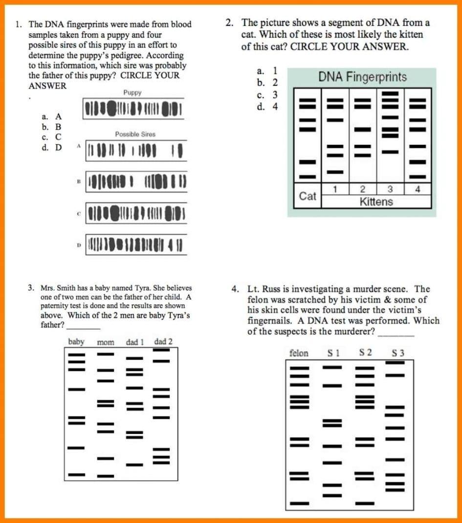 Worksheet Dna Fingerprinting Worksheet Lab Dna Fingerprinting And Regarding Dna Profiling Worksheet