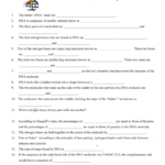 Worksheet On Dna And Rna With Dna To Rna To Protein Worksheet