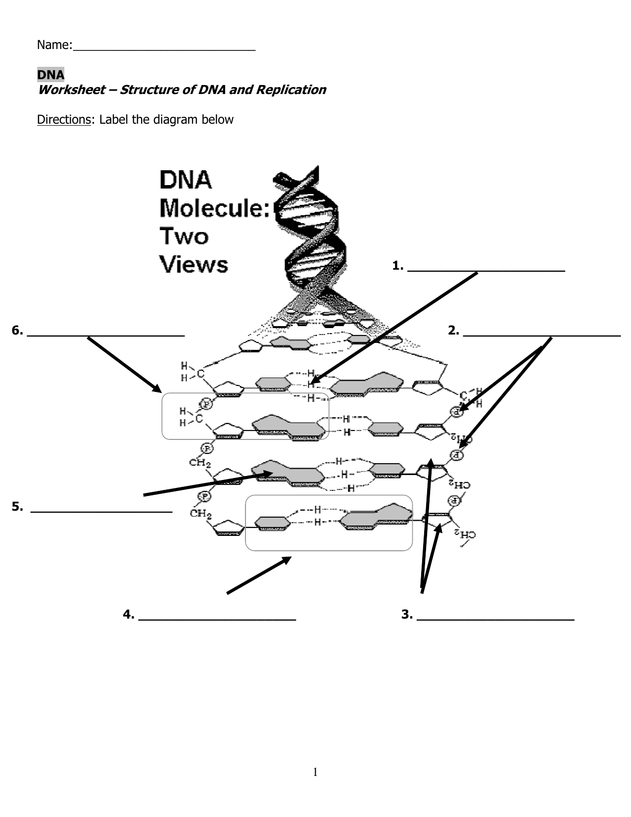 Worksheet – Structure Of Dna And Replication Along With Structure Of Dna And Replication Worksheet Answers